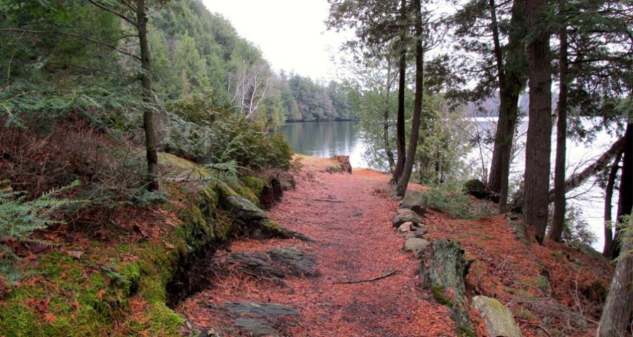Limberlost-Spring-Feature