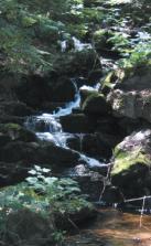 buck lake falls