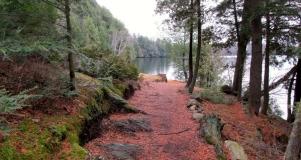 limberlost-spring-feature